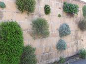 Cool Living Wall