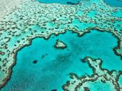 Save Great Barrier Reef Need Start Now, Right Now' Video Environment Guardian