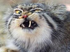 Funniest Images Cats Pulling Faces