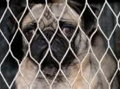Ireland Sets Puppy Mills