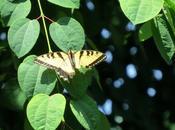 Butterflies Free Fly...