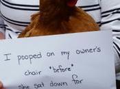 Lesson 1403 More Chicken Shame