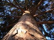 Space, Relativity, Big, Pine