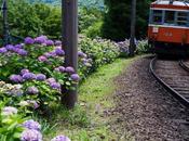 オールドレンズと巡る,紫陽花に染まる箱根登山鉄道 Hakone Tozan Railway, with Lenses.