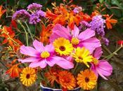 Vase Monday Colour, Colour
