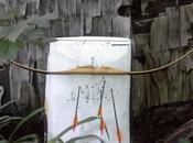 Turn Your Backyard Archery