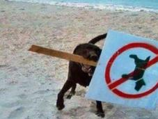 Funny Images Naughty Dogs Beach