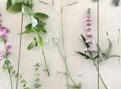 Sunday Bouquet: Pink Flowers, Basil, Thyme