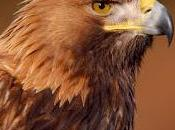 South Scotland Golden Eagle Project Secures Million Heritage Lottery Fund Boost