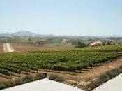 AdegaMae Winery
