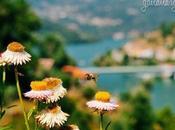 Flight Bumblebee