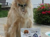 Tracking Source Your Dog's Calories with Weruva? #ChewyInfluencer