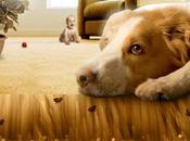 Natural Getting Fleas Your House Permanently