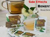 Lemon Myrtle Tea: Side Effects, Benefits Dosage Info