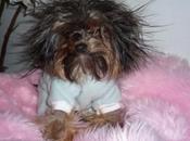 Dogs Having Hair