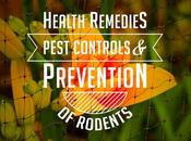 Health Remedies: Pest Control Prevention Rodents