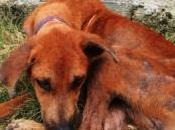 Havana, Have Problem: Stray Cats Dogs