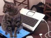 Cats Interrupt Your Daily Life