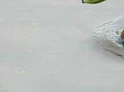 Outside Tiny Drops (Photography)