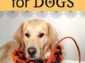 Halloween Safety Tips Dogs