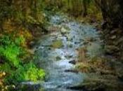 Fundamental Wilderness Suvival Tips