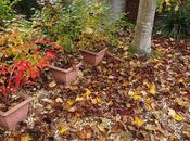 Some Thoughts About Leaf-mould Compost