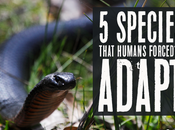 Species That Humans Forced Adapt