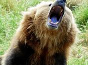 These Teens Barely Survive Bear Attack.