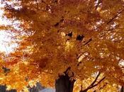 Tribute Trees