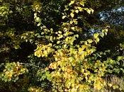 Tree Following: Autumn Beckons