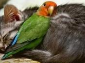 Feather Friendly Cats Love Birds