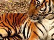 Stop Wildlife Trafficking ForceChange