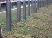 Clock Change Increases Deer Risk Roads