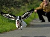 Perfectly Captured Superhero Flying Dogs