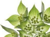Book Review: Encyclopedia Garden Plants