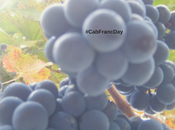LOVE Cabernet Franc Celebrate December