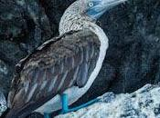 GALAPAGOS ISLANDS: Guest Post Scott Chandler