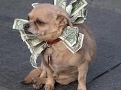 World's Richest Pets