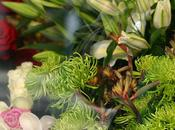 Rare Palm Threatened Demand Global Flower Trade