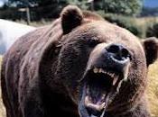 Bear Attack Pepper Spray?