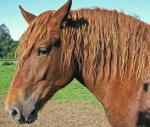 Featured Article: Horse Wormers