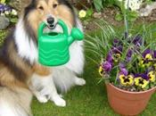Green Pawed Dogs Doing Spot Gardening
