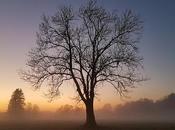 Smartphone Photos Natural Landscapes