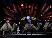 """Ringling Brothers Circus """"The Greatest Show Earth"""" Closing"""