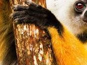 MADAGASCAR: Leaping Lemurs, Guest Post Owen Floody, Part
