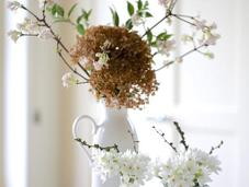 Vase Monday Forced Blossom