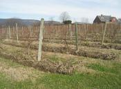 Hudson Valley Soil Vines