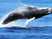 Best Whale Watching Destinations Around World