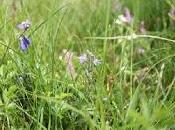 Rampisham Down: Wonderful Outcome Conservation