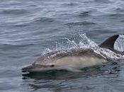 Surveys Record Highest Numbers Three Dolphin Species Hebrides